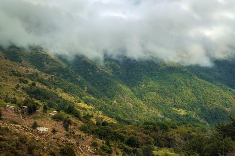 In diesem Nebel entstanden die Waldbilder auf 1700