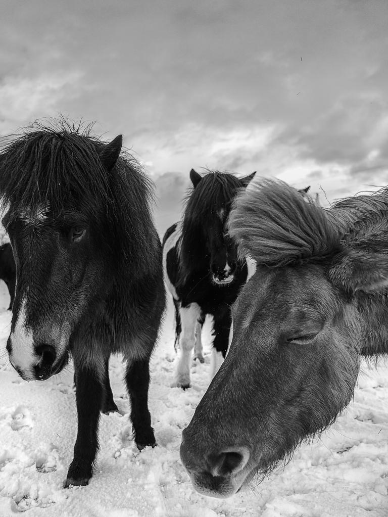 Fludir_Horses_jpeg (1)