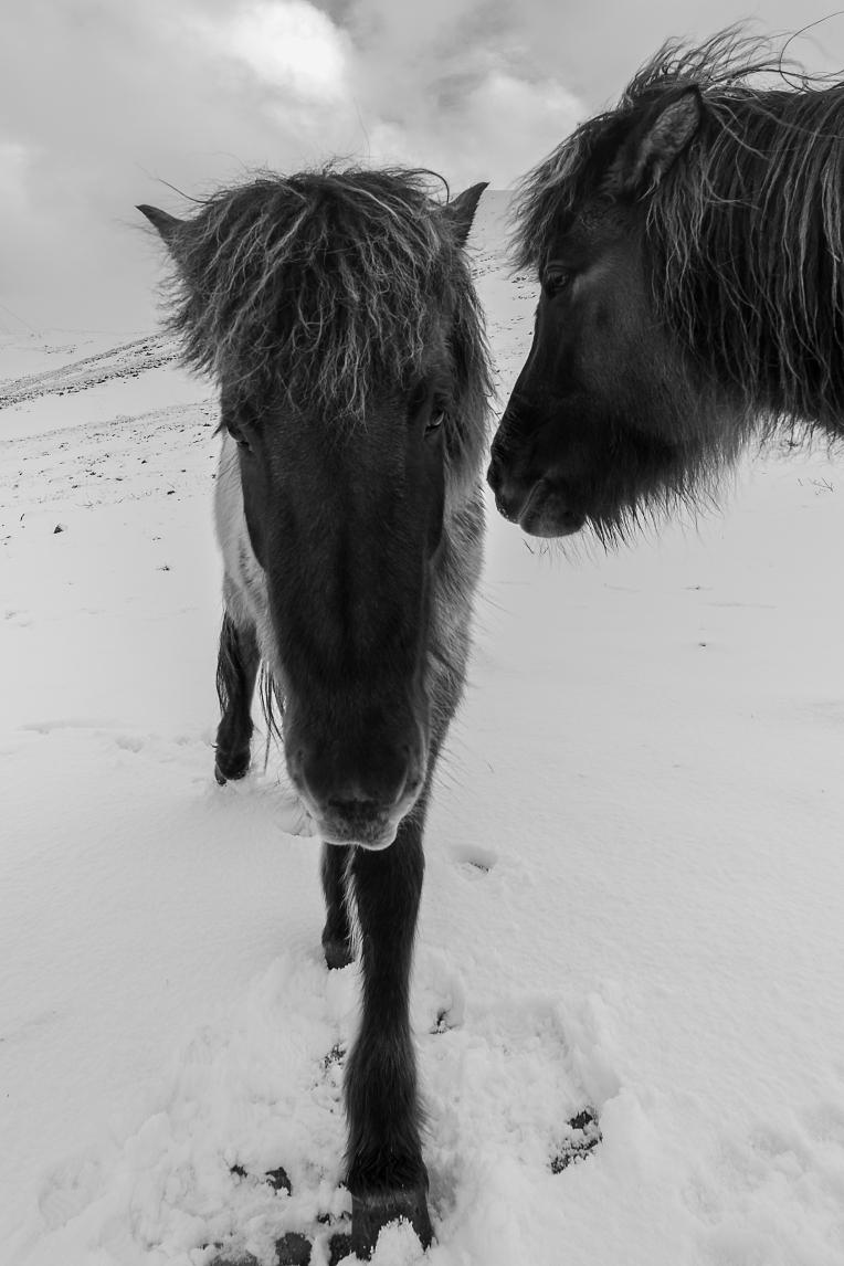 Fludir_Horses_jpeg (10)