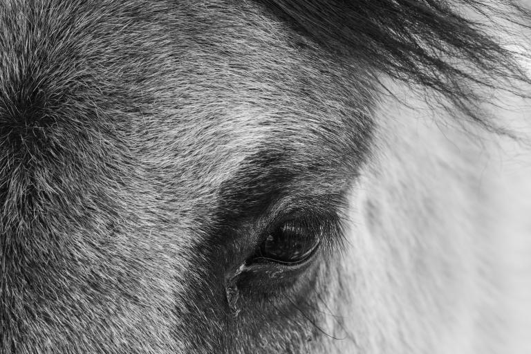 Fludir_Horses_jpeg (11)