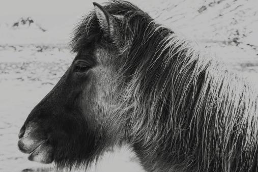 Fludir_Horses_jpeg (12)