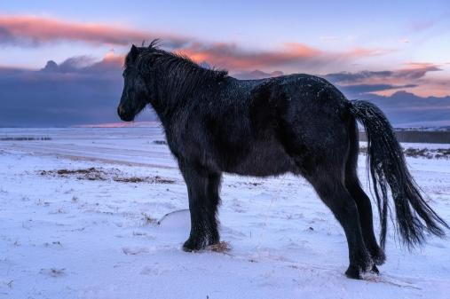 Fludir_Horses_jpeg (13)