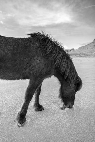 Fludir_Horses_jpeg (15)