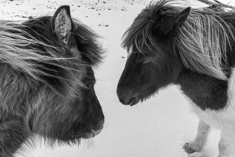 Fludir_Horses_jpeg (8)